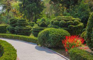 Gartengestaltung mit Formgehölzen