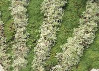 Dekorative Pflanzenkombination
