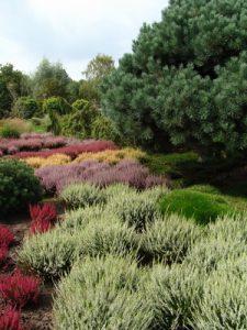 prachtvoller Heidegarten im Sommer