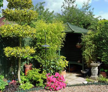 Der Bambus Taipan Sorgt Fur Ambiente Im Garten