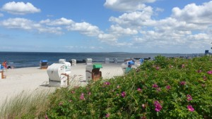 Hagebuttenhecke als Strandbefestigung